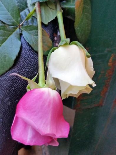 dumpster-roses